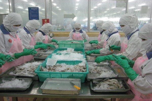 Tôm Việt được hưởng thuế suất nhập khẩu 0% khi bán vào Mỹ. Ảnh: Trung Chánh