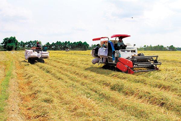 Trong bảy tháng đầu năm, xuất khẩu gạo Việt Nam vào Philippines đạt 1,46 triệu tấn, tăng đến 218,8% về khối lượng so với cùng kỳ. Trong ảnh là nông dân ĐBSCL thu hoạch lúa. Ảnh: Trung Chánh