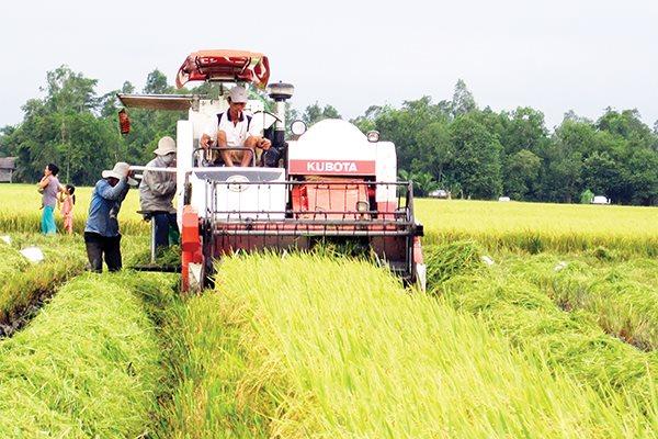 Giảm diện tích lúa trong chiến lược phát triển ĐBSCL theo các chuyên gia là cần thiết. Ảnh: Trung Chánh