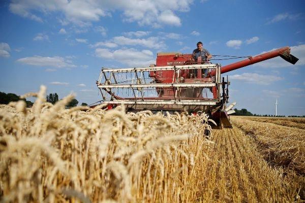 Gạo và lúa mì 'dắt tay nhau' tăng giá mạnh trên thị trường thế giới