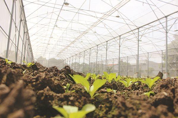 Nông nghiệp Việt Nam: Để là người dẫn đầu
