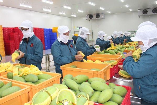 Xuất khẩu trái cây chính ngạch sang Trung Quốc phải đáp ứng điều kiện gì?