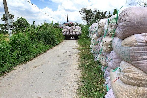 Giá lúa gạo nội địa