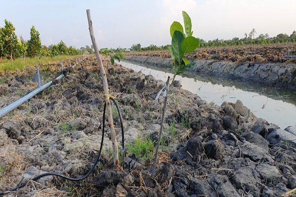 Giống cây trồng, vật tư nông nghiệp, thuốc thú y, thức ăn thuỷ sản..., được đề xuất đưa vào danh mục hàng hoá thiết yếu. Ảnh: Trung Chánh